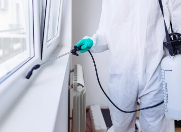 Affordable Pest control Service In Adelaide