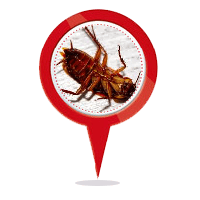 Cockroach Control Adelaide