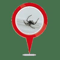 Spider Control Adelaide