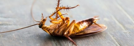 Dead Pest Removal Service Adelaide