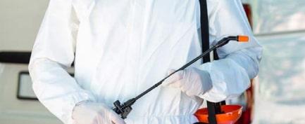 Emergency Pest Treatment Adelaide